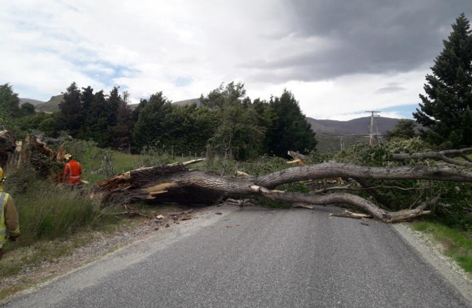 The strong winds felled trees near Queenstown yesterday, in Hogans Gully Rd.