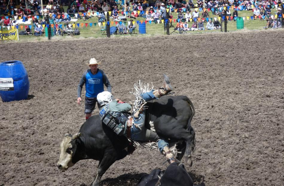 Hastings man Lane Whitelock loses his grip in the second division bull ride.