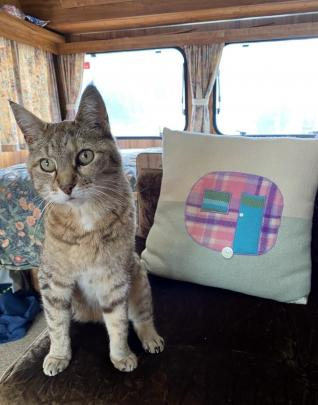 """Claws"", the camp cat at Omarama Top 10 Holiday Park, does the rounds on December 30 to welcome..."