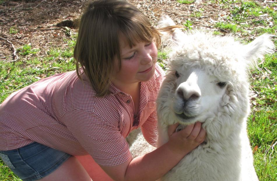 Tamara Smales (8)  enjoys a special moment with Lotti the alpaca, at home in Clydevale. PHOTO:...
