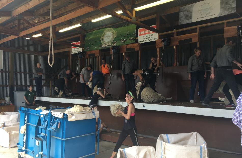 The speed shearing always draws a crowd at the Duvauchelle A&P Show.