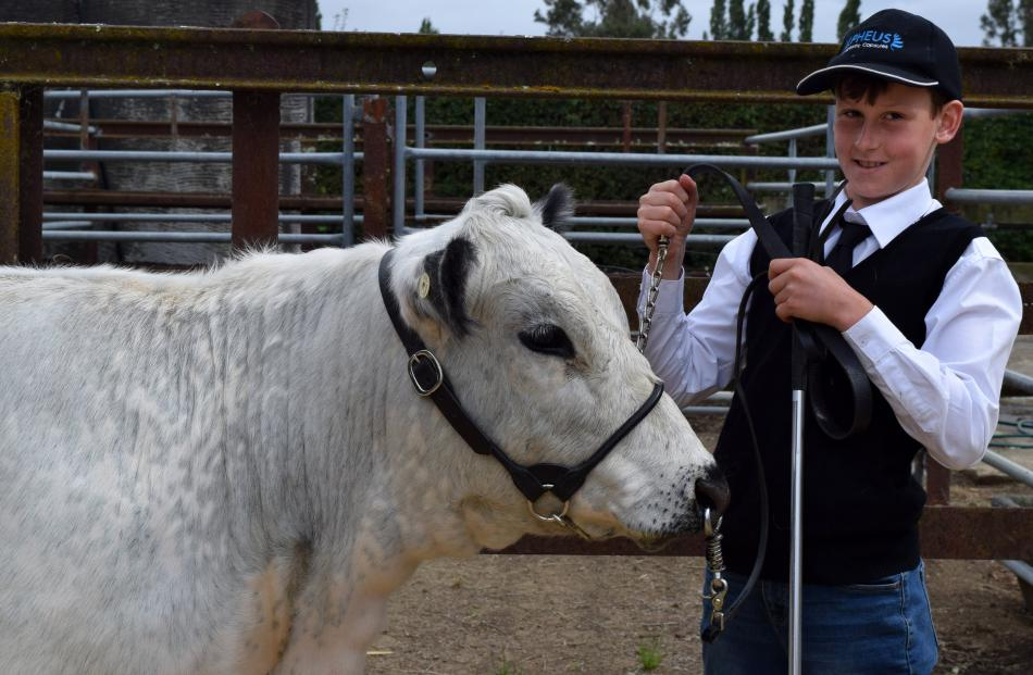 Showing his Speckle Park heifer at the Otago Taieri A&P Show, in Mosgiel, on Saturday is Dustin...