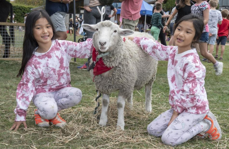 Six-year-old twins Jinfang, left, and Jinping Leng, make friends with Cubby the sheep in the...