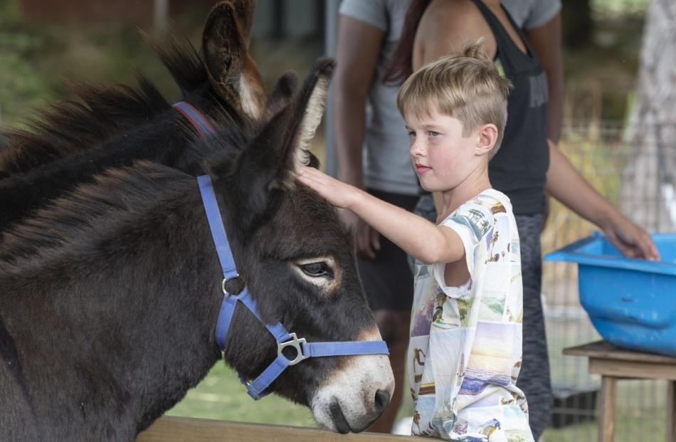 Noah James, 8, pats a donkey in the petting zoo area.