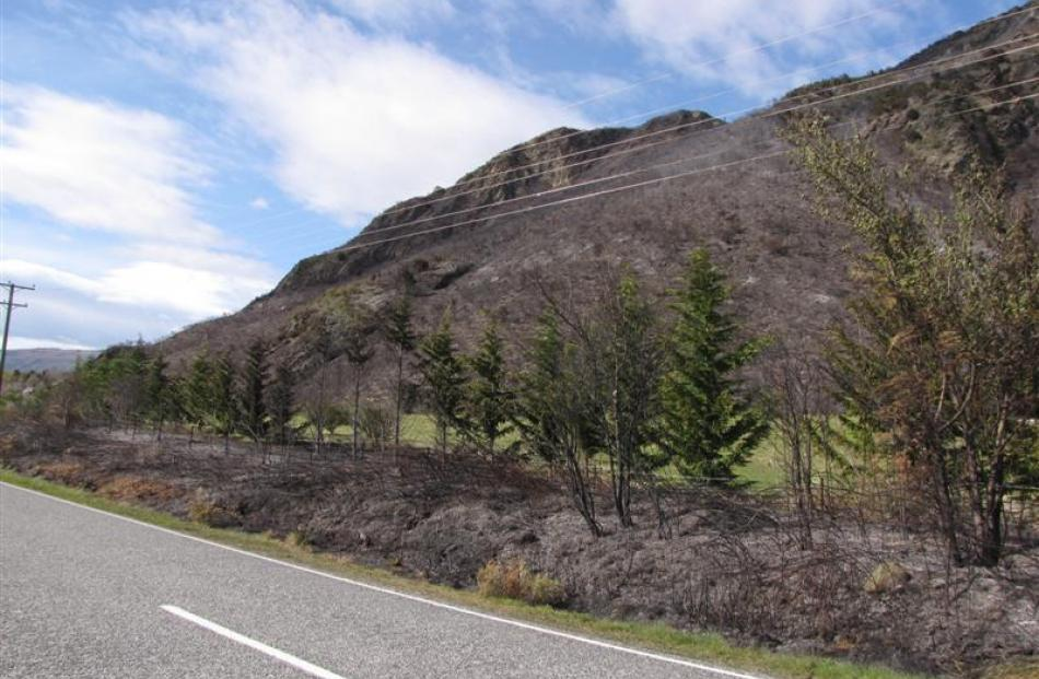 The fire came right down to the Wanaka-Glendhu Bay road. Photo by Lucy Ibbotson.