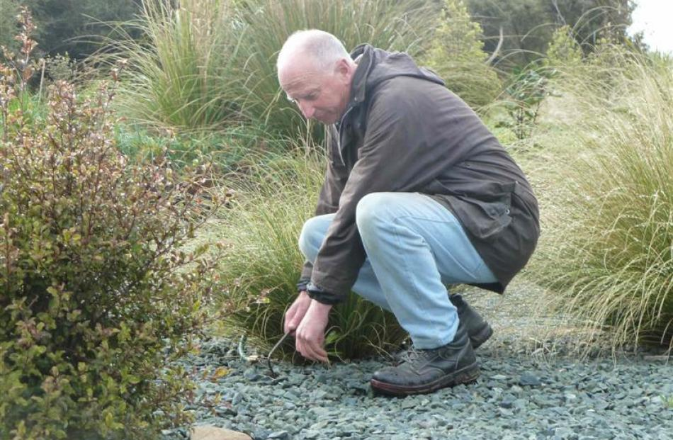 Graeme Cook does a spot of weeding in the garden.