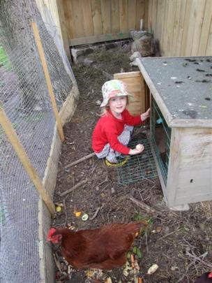 Queenstown Montessori pre-schooler Gabriella Hind (3) collects  eggs from the  pre-school's...