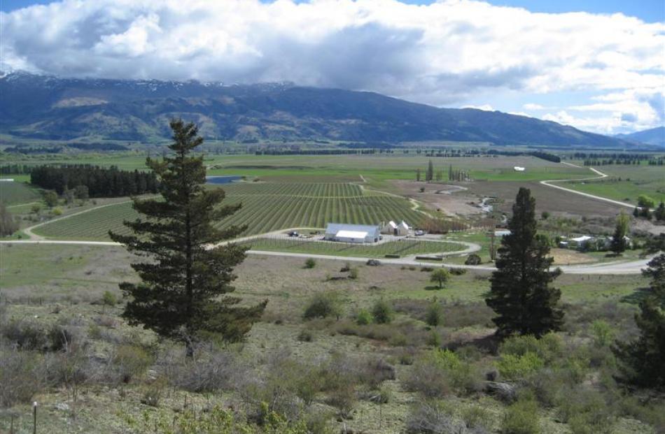 Dry stony ground above the Bendigo vineyards.
