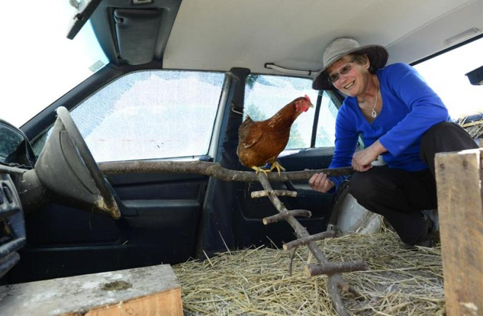 Helen Hillis adjusts the Mercedes henhouse, home to four of the family's hens.