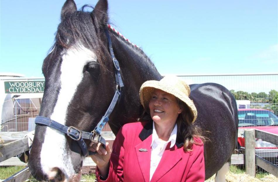 Canterbury Clydesdale breeder and exhibitor Deborah Cook says being involved with the breed is...