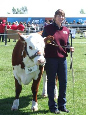 Liz Gibson, of Middlemarch, helps her son Will exhibit his Hereford cattle at the show.