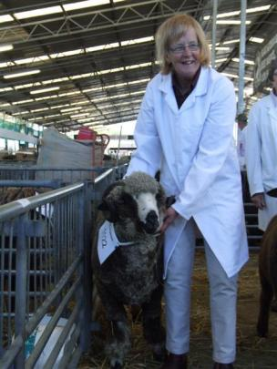 Phillippa Sanders, of  Waimate, during judging of the black and coloured sheep section.