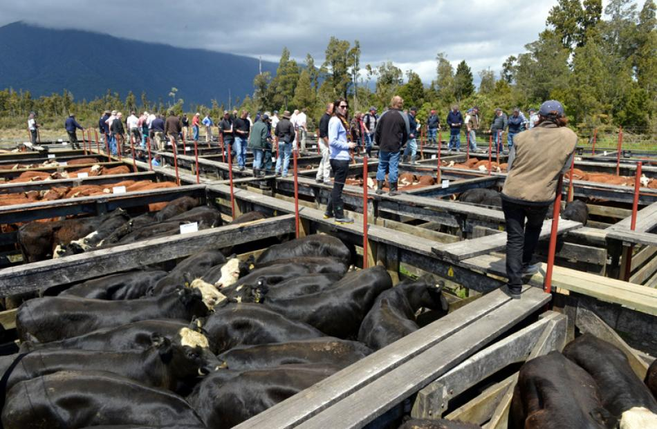 Haast cattle sale.