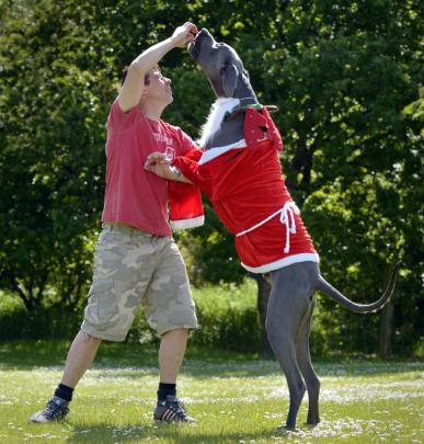 In his shadow  . . .  Craig Findlay feeds Shadow, a two-year-old Great Dane.