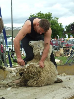 Danny Mason, of Balclutha, demonstrates machine shearing.