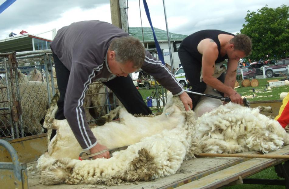 From left: Ronny Hill and Danny Mason, both of Balclutha, demonstrate sheep shearing.