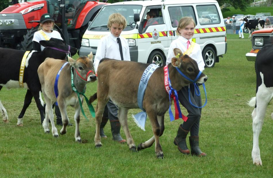 From left: Thomas (10) and Fenella (8) Ballantyne, of Clydevale, lead calves Ruby and Rose in the...