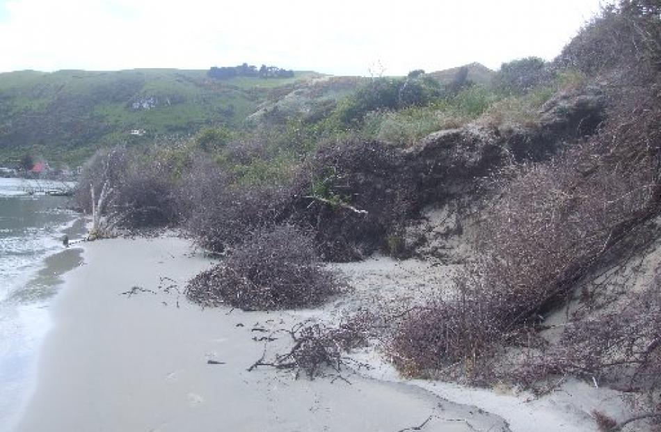 Te Rauone Beach, near the mouth of the Otago Harbour, has had problems with erosion for more than...