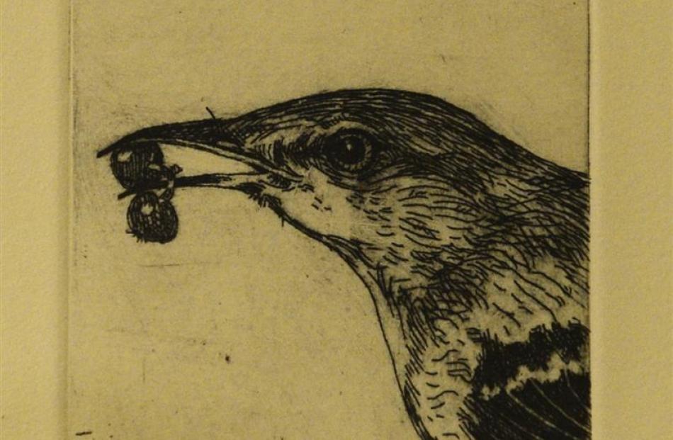 Mockingbird. Photos by Peter McIntosh.