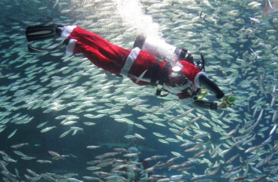 A dressed as Santa swims with sardines at The Coex Aquarium in Seoul, South Korea. (Photo by...