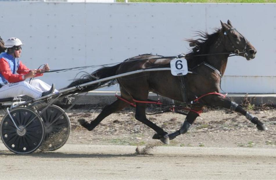 Nathan Williamson drives No Bettor  to victory  at Omakau in January. Photo from ODT files.