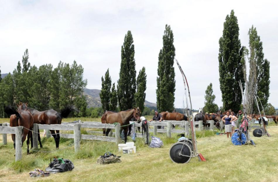 Horses wait to compete.