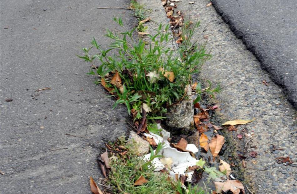 Weeds on London St.
