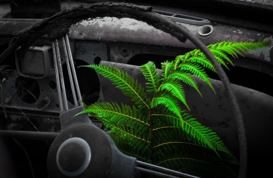 Open Projected Images  Honours:  Phil Davison,  Dunedin  'Horopito Fern'