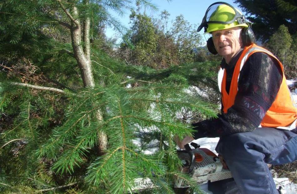 Wakatipu Wilding Conifer Control Group chairman Peter Willsman. Photo by Joe Dodgshun.