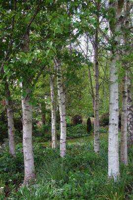 The birch grove was created from left-over nursery trees.