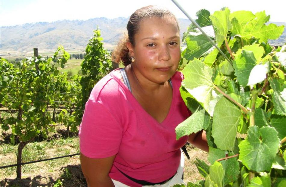 Vinewise Viticulture contract worker Paloma Santos, of Brazil, helps thin pinot noir grapes at...