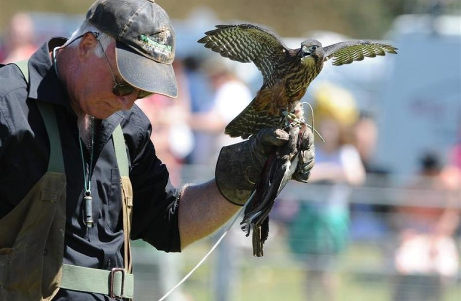 Wingspan chairman Noel Hyde, of Rotorua, holds Cazador during the falcon demonstration.