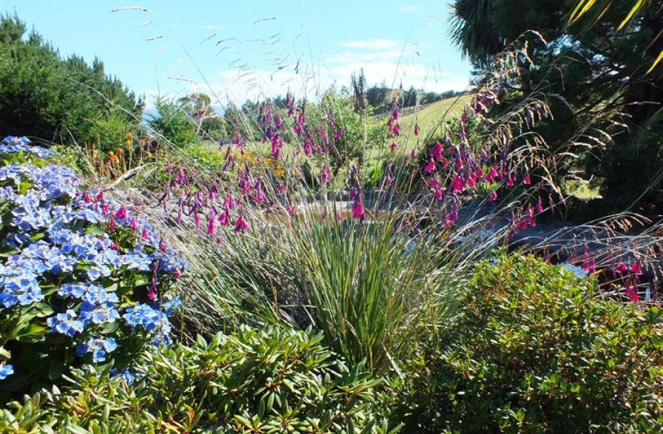 Behind the angels' fishing rods (Dierama pulcherrimum) is a pond where a previous owner bred...