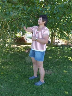 Pam Deans checks her walnut crop.