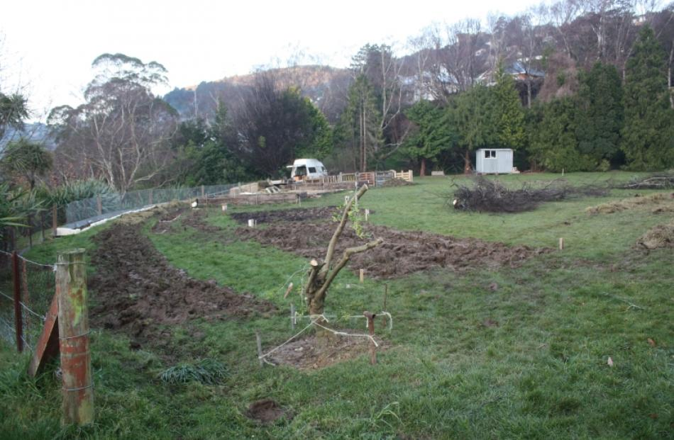 The garden gets underway. The olive tree (foreground) is believed to have been presented to the...