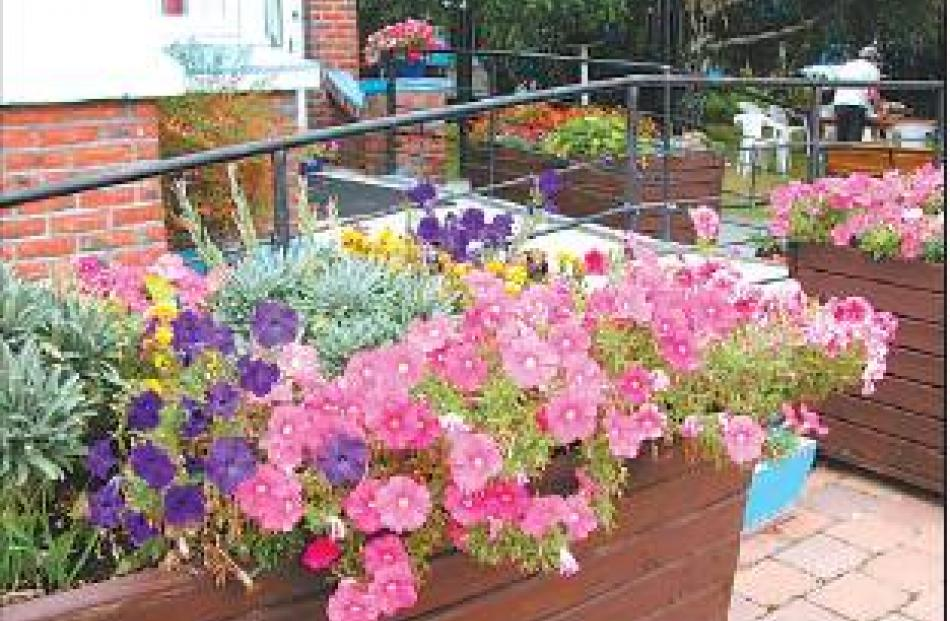 Strike me pink: Planter boxes bring vibrant colour to the entrance of Castlewood.