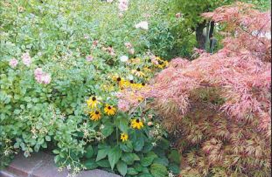 Mix and match: A bright combination of perennials, roses and specimen trees add contrast and...