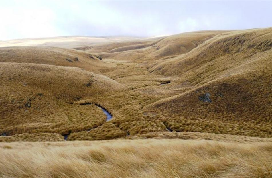 Deep Stream, the pristine headwaters of Dunedin's water supply, is home to Eldon's galaxiid,...