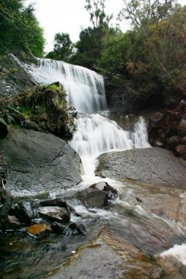 The natural waterfall at Whare Flat, which keeps trout from preying on Otago's endangered native...