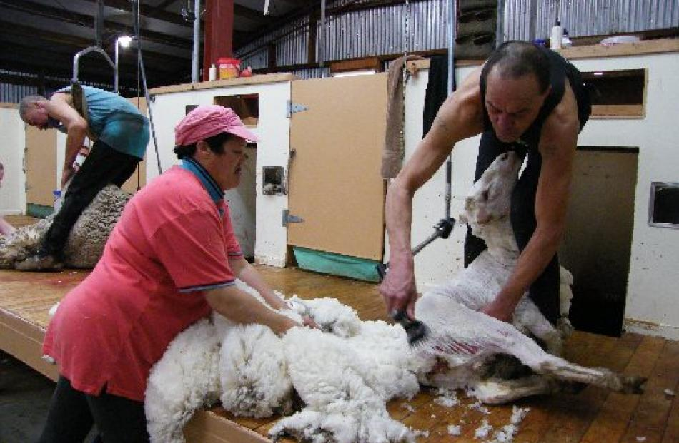 Shearer Karl Ropiha and wool handler Lynley Shaw remove the fleece.