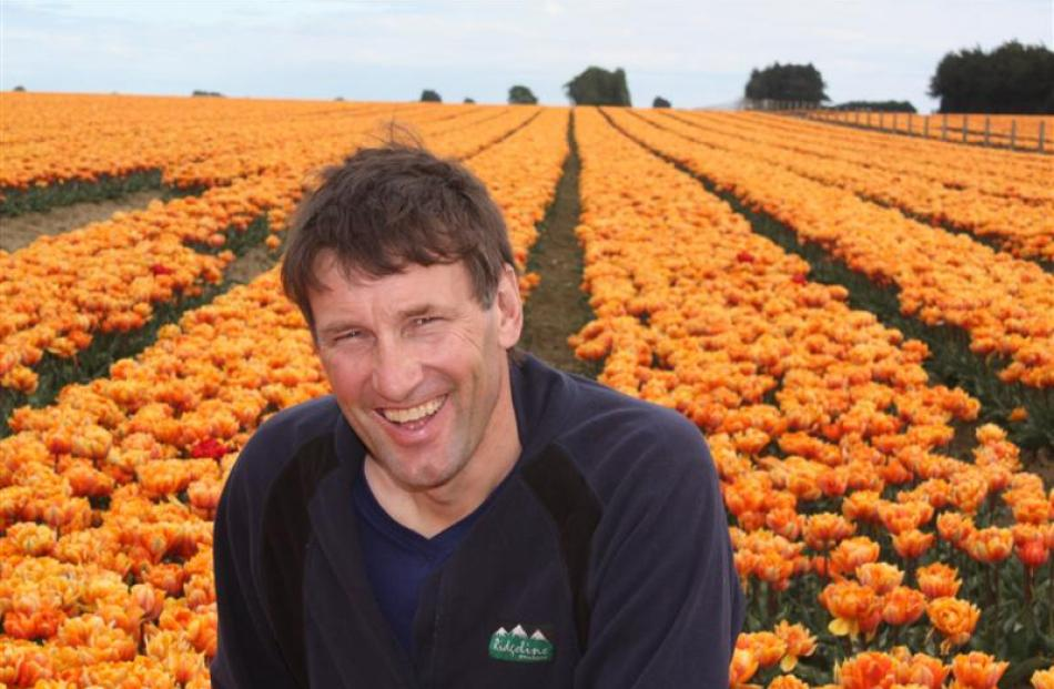 Production manager John van Eeden with a field of unusual peony tulips.