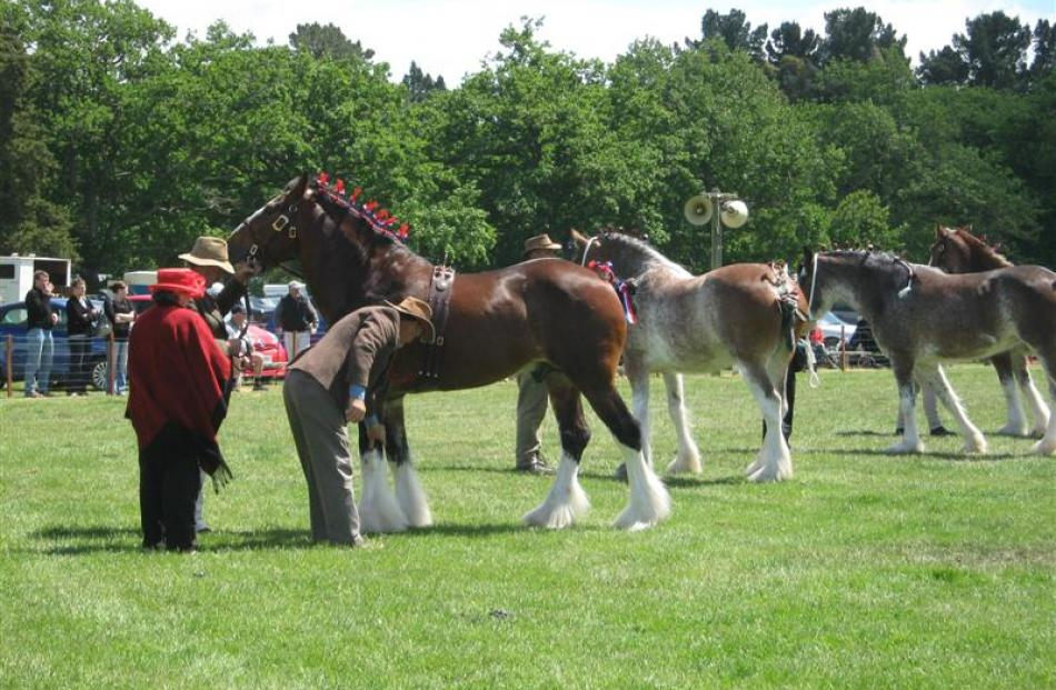 Clydesdale judging at a previous show. Photos from Courier Country Files.