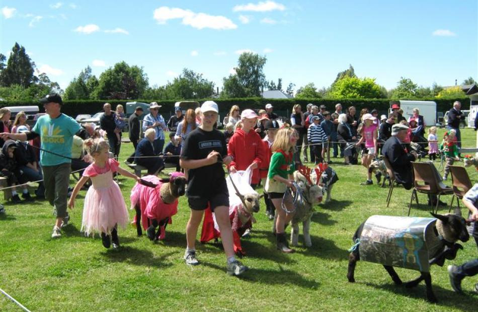 Pet lambs taking part in the fancy dress section of the Pet lamb class at a previous Courtenay  A...