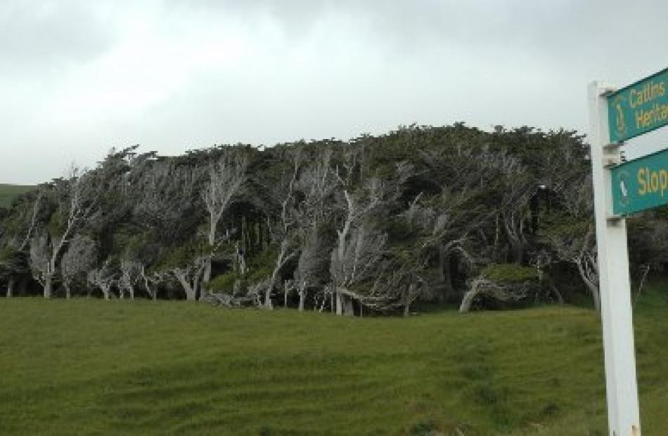 A stand of trees at Slope Point reveals the southernmost point of the South Island is aptly named.