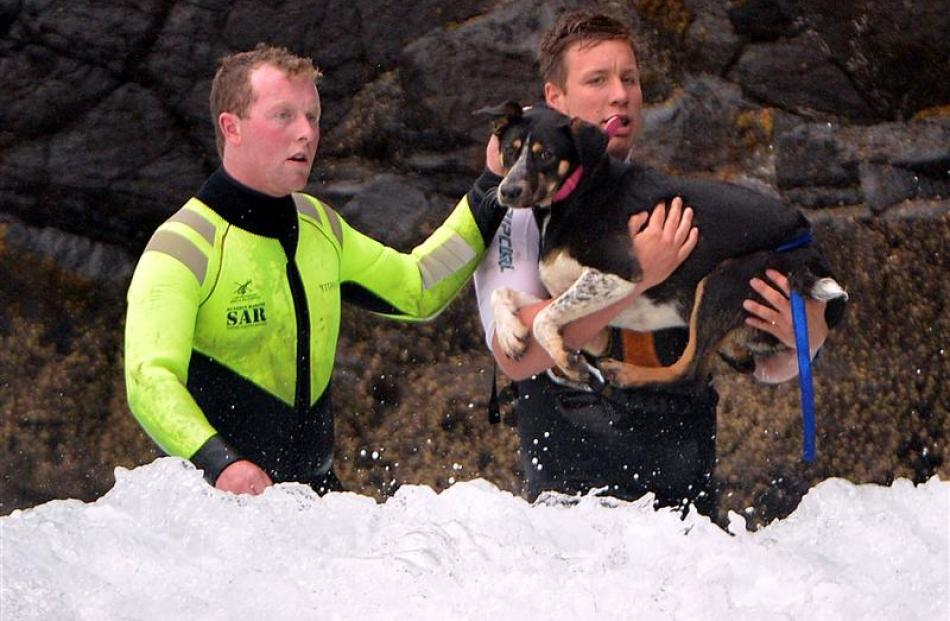 Mr Woods carries the dog through the surf back to the beach. Beside him is Mr McAlevey.