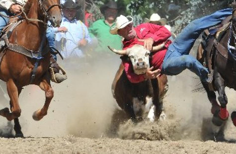 Warren Nichol, of Omakau, tries to wrestle a steer to the ground at the Outram Rodeo yesterday....