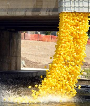 Rubber ducks tumble from Clyde St bridge into the Water of Leith for the Charity Duck Race.
