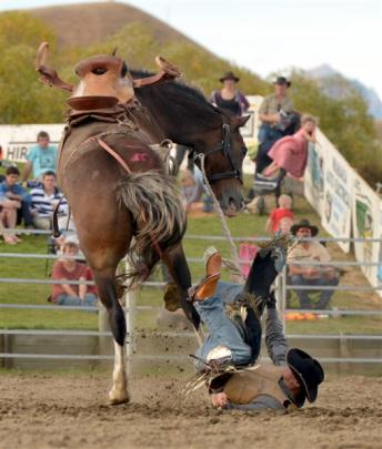 Jared Mee, from Rangiora, takes a fall from a saddle bronc. Photo by Stephen Jaquiery.
