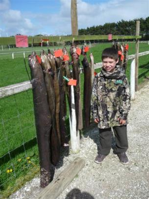 A competitor with his eels during the Chathams annual hunting contest.