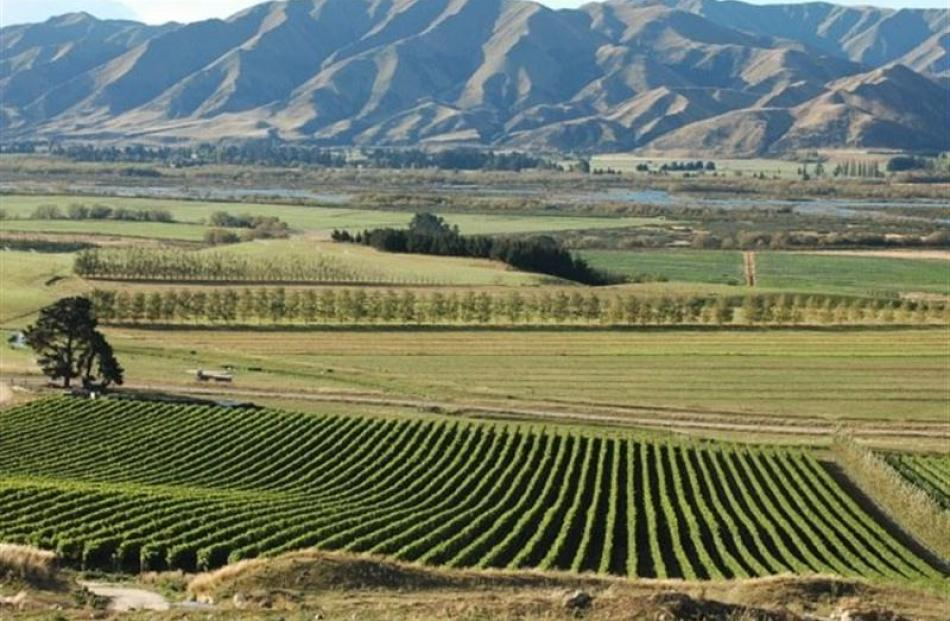 Grapes grow in a cool climate and limestone soil at an Ostler vineyard in Waitaki Valley. Photo...